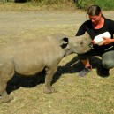 Ringo named after Ringo Starr from the Beatles is doing his bit to educate us on the importance of conserving Rhino in the wild.