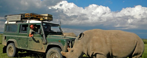 On safari with Africa Expedition Support with near extinct Northern White Rhino in Ol Pejeta Conservancy in Kenya