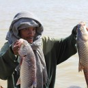 Lake Tana is Ethiopia's largest lake and source of the Blue Nile River. Fishing on the lake is very important to the local economy, this fisherman is very happy with his catch of Nile Perch.