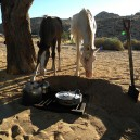 The wild horses of Namibia near Aus come to investigate what we are cooking for dinner