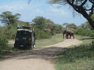 Animals have right of way, we pulled to the side of the road while game driving in Amboseli National Park to give these elephants plenty of space