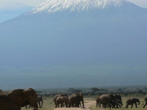 Amboseli National Park in Kenya with herds of elephants and views of Mount Kilimanjaro in Tanzania in the background. What could be more picture perfect?