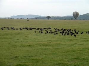 There are few better ways to witness the great Wildebeest Migration then from a hot air balloon. One of the many optional activities for those not scared of heights!