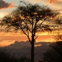 You know you are in Africa when you witness the sun setting through Acacia trees.