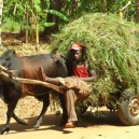 It is amazing what obstacles we need to negotiate while driving our land rovers across East Africa.