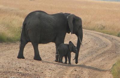 tanzania elephant and baby