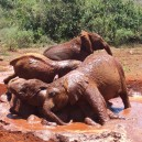 David Sheldrick elephant orphanage next to Nairobi National Park is the perfect way to spend a morning while on a school trip to East Africa