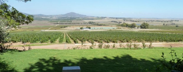 Cape Town wineries