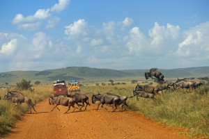 One of the best ways to experience the wildebeest migration is on a guided self drive safari