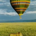 Hot air balloon safari lion spotting