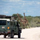 Waiting for a couple of giraffe to make their next move on our 7 day Migration Discovery self drive safari in Kenya
