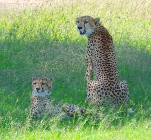 Just because you are on a budget safari in Africa does not mean you miss out on the best!
