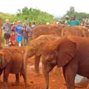 Another day at the David Sheldrick Wildlife Trust elephant orphanage in Nairobi