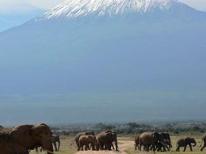 Classic photo of Mt Kilimanjaro and elephant herds in Amboseli NP