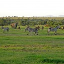 A plethora of wildlife all hanging out together on safari with Africa Expedition Support