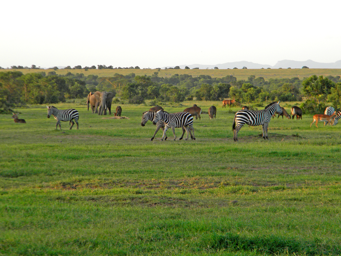 kenya wildlife The kenya wildlife service (kws) is a kenyan state corporation that was established in 1989 to conserve and manage kenya's wildlife it is established under an act.