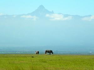 Rhino and Mt Kenya